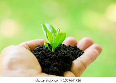 seedling in hand of man with abundance soil and blurry green background with sun light, growth concept, startup concept, spring concept, nature and care.