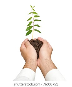 seedling in hands as a symbol of nature protection