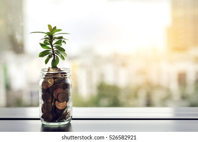 Seedling Plant are Growing on Money Coin Bottle with Blurred Cityscape Background - Business Concept