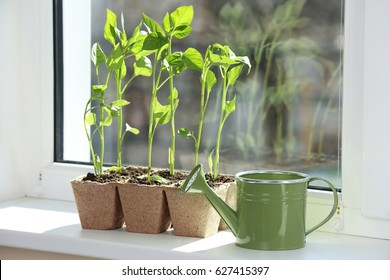 Seedling of plants in pots on window sill