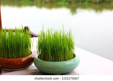 seedling rice in round pot on white table with blur water background