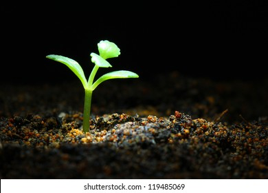 Seedling in spot light