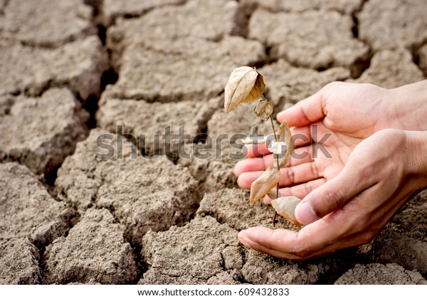 Seedling wither on dry land. As the young man's hand was gently encircled, change of weather.