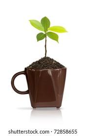 Seedlings in coffee cup.