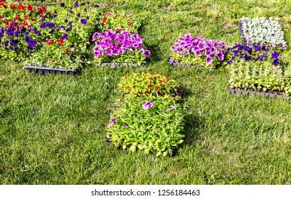 Seedlings of decorative flowers on the green field