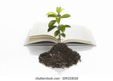 Seedlings And The Development Of The Images Of Books