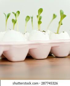 Seedlings in the eggshells