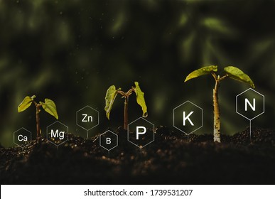 Seedlings are exuberant from abundant loamy soils. Development and  role of nutrients in plant life with digital mineral nutrients icon.