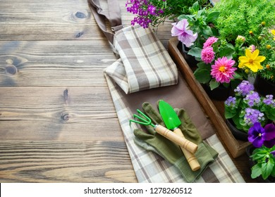 Seedlings of garden plants and flowers in flower pots. Shovel, rake, gloves and apron. Top view. Copy space for text.