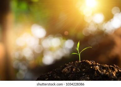 Seedlings grow in soil.Planting trees to reduce global warming.