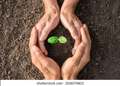 Seedlings are growing from abundant soil. And the hand of the old woman, and the man's hand in her arms.