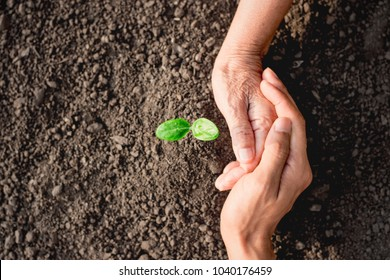 Seedlings are growing from abundant soil. And the hand of the old woman, and the man's hand in her arms, ecology concept.