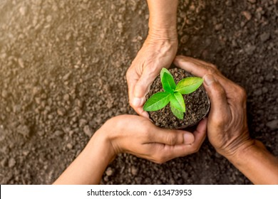 Seedlings are growing in the nursery bag. As the hands of the old woman, the hands of the old man and the hands of young man are about to be planted in the fertile soil.