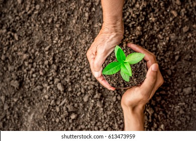 Seedlings are growing in the nursery bag. As the hands of the old woman and the hands of the young man are about to be planted in the fertile soil. - Shutterstock ID 613473959