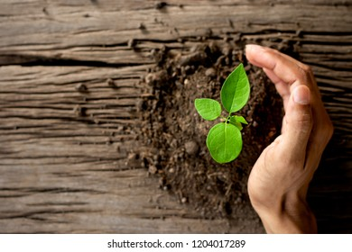 The seedlings are growing on the old wooden floor while the men's hands are gently embracing.