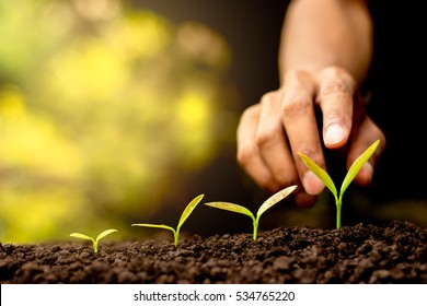 Seedlings are growing out of the soil. The hand of man is to touch gently.