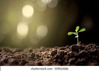 The seedlings are grown from the ground up with bokeh background.