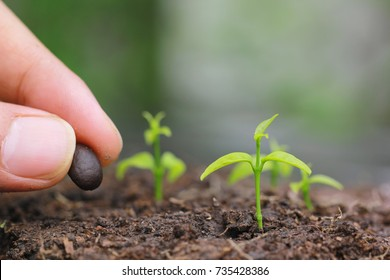 Seedlings are grown from the ground and Hand planting a seed in soil agriculture on natural green background, Growing plants concept