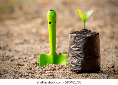 Seedlings are grown in the nursery bag on the ground barren, ecology concept.