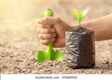 Seedlings are grown in the nursery bag on the ground barren. While a men's hand holding a shovel, ecology concept.