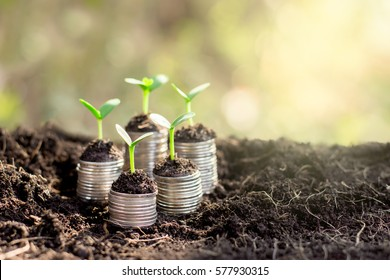 Seedlings are grown on a coin placed on the ground.