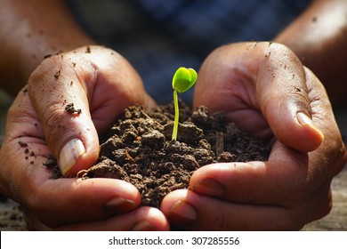 Seedlings in the hands of agriculture