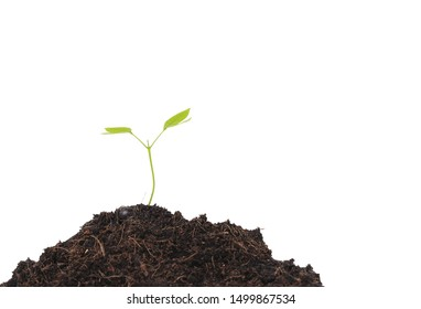 Seedlings of plants that have just sprouted from seeds isolated on white background. Concept of planting trees to protect nature and the environment.