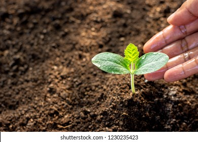 The seedlings of the pumpkin grow while the hands of the men are being watered.