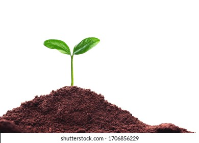 Seedlings that grow on the ground separate from the white background.