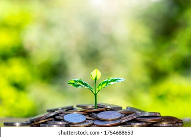 The seedlings that grow on a pile of coins include a blurred green nature backdrop, the idea of saving money and economic growth.