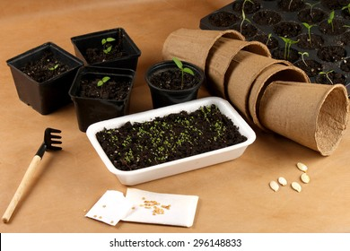 Seedlings vegetables, seeds and containers
