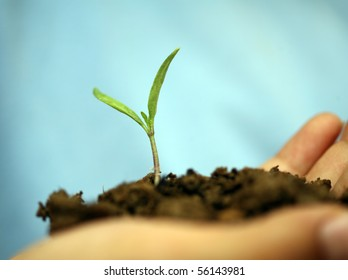 seedlings were held for additional time to grow