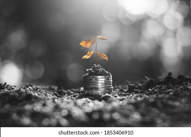 The seedlings were withered on the coins stacked on the ground.