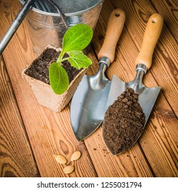 Seedlings zucchini and garden tools on a wooden surface