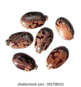 Seeds of Castor Bean Plant (Ricinus communis) on white background