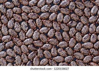 Seeds of Castor Bean (Ricinus communis) - Background