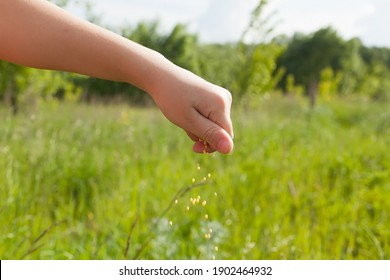 Seeds falling from a hand on green background