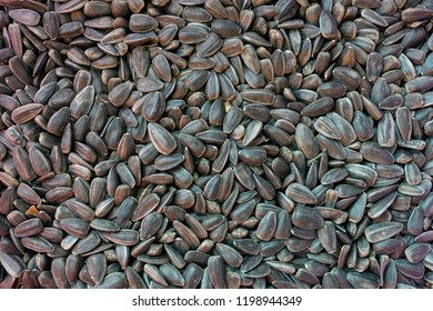 seeds of harvested sunflower as background