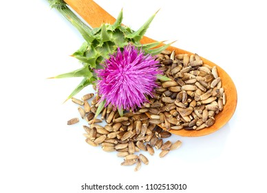 Seeds of a milk thistle with flowers (Silybum marianum, Scotch Thistle, Marian thistle ) in a wooden spoon.