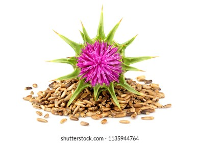 Seeds of a milk thistle with flowers (Silybum marianum, Scotch Thistle, Marian thistle ) Isolated on white closeup.