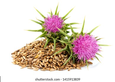 Seeds of a milk thistle with flowers (Silybum marianum, Scotch Thistle, Marian thistle ) Close-up on white background.