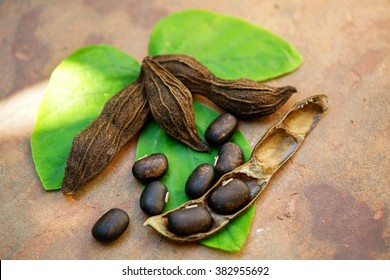 Seeds of Velvet bean or Mucuna pruriens which use as medicinal plants or herbal medicine on the green leaves in top view flat lay. Herbal medicine used for the management of man infertility.