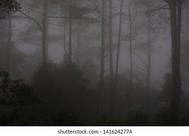 seeing the mist that comes in the afternoon