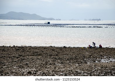 seeker on the shore