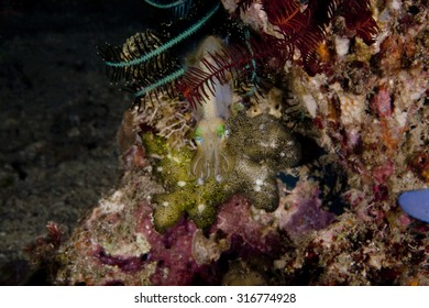 Seeking protection in coral block he cuttlefish is looking to hide