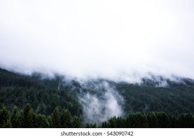 It seems like a big fire in the forest at first view. However it's the opposite. After a rainy day in the austrian spruce woods by Feldkirch rose the water-saturated air up to the peak.