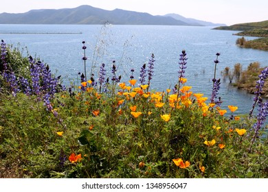 Seen from above is lake near banks of California poppies and lupine wildflowers