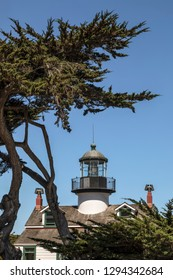 Seen here through the interesting trunks of Monterey cypress trees of Pacific Grove, the Point Pinos Lighthouse as guided mariners up the rocky California coast since 1855.