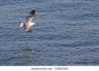 Segull flying over the sea. Beautiful sea view