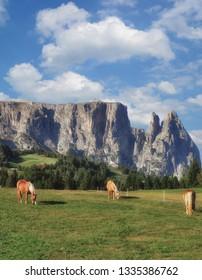 Seiser Alm with famous Schlern Mountain,South Tirol,Dolomites,Italy